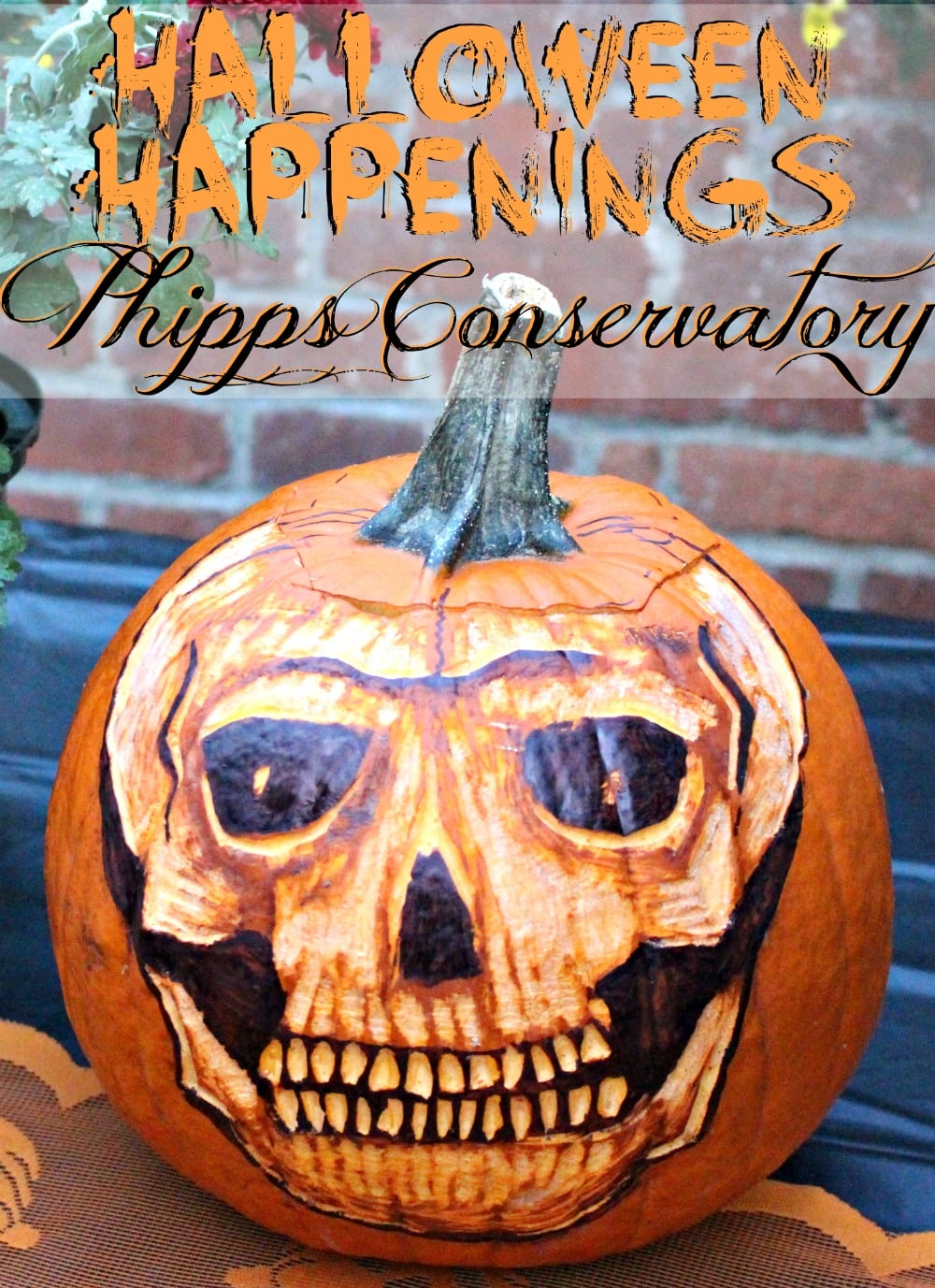 What To Expect During A Halloween Cruise With Carnival: Halloween Happenings At Phipps Conservatory // What To